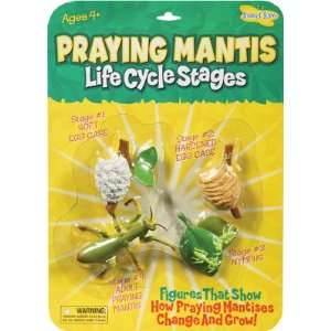 Insect Lore   Praying Mantis Life Cycle Stage Figures