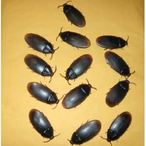 13  Bakers Dozen Fake Roaches Prank Novelty Cockroach Bugs