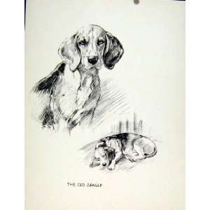 Pet Dog Animal Sketch Fine Art Drawing C1936 Home & Kitchen