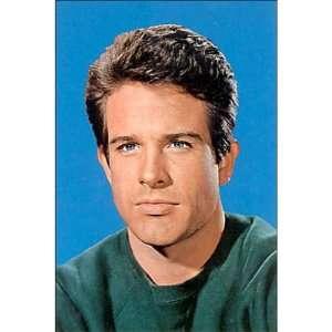 4x6) Warren (Classic Hollywood Actor) Movie Postcard: Home & Kitchen