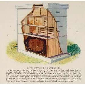 1937 Print Beekeeping Beehive Diagram Comb Honey Bee