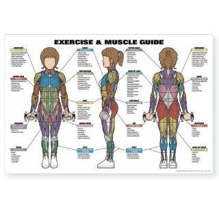 Female Muscle Diagram (9780973941104): Andre Noel Potvin