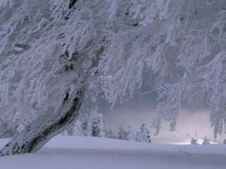 Snow Blanketed Trees in a Fairy Tale Winter Landscape Photographic
