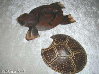 Schildkröte Schatulle Holz Sammler Deko Kunst