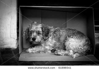 Stray Dog Makes His Home In A Cardboard Box Stock Photo 61896541