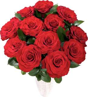 12 Red Roses high resolution image  Bunches the online florist