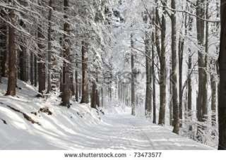 Winter Lane Among Frosted Trees Lit By The Morning Sun. Stock Photo